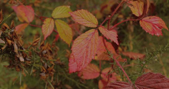 Colourful Leaves for Autumn Content Ideas