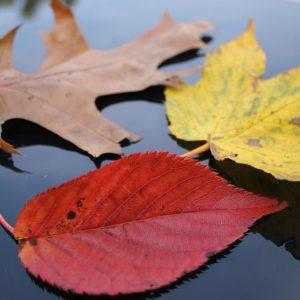 Autumn Content Ideas - colourful leaves